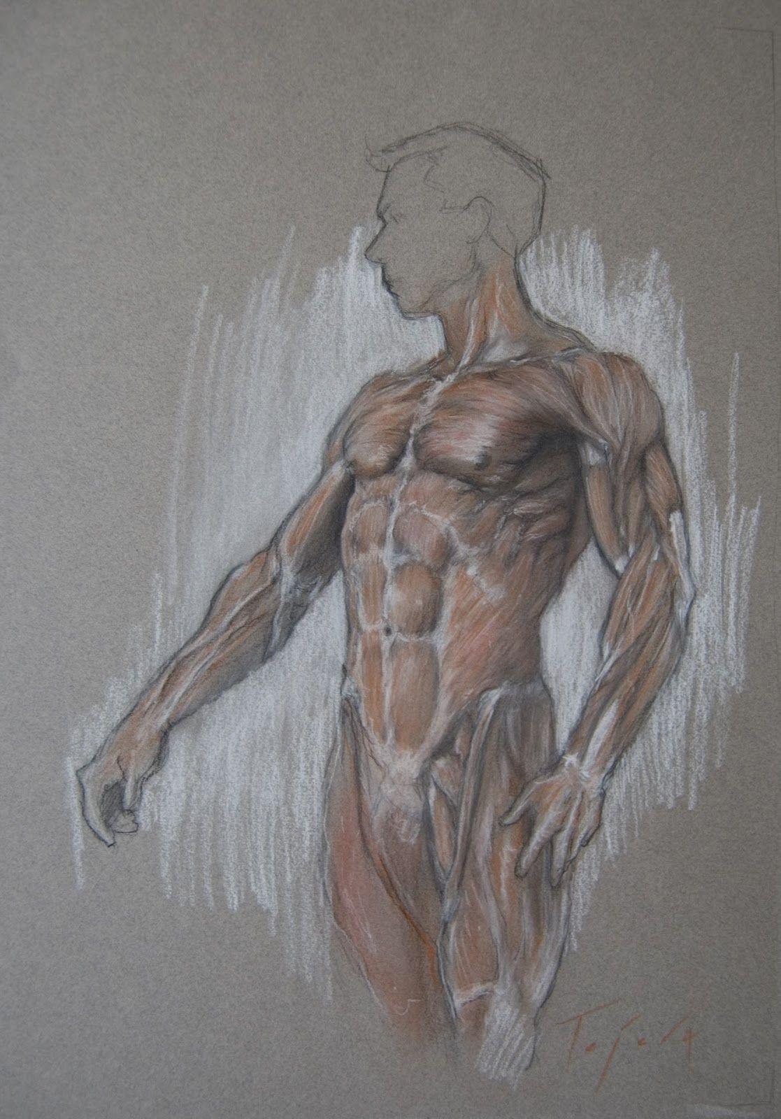 Nada melhor do que fotos para estudar anatomia masculina não é mesmo ...