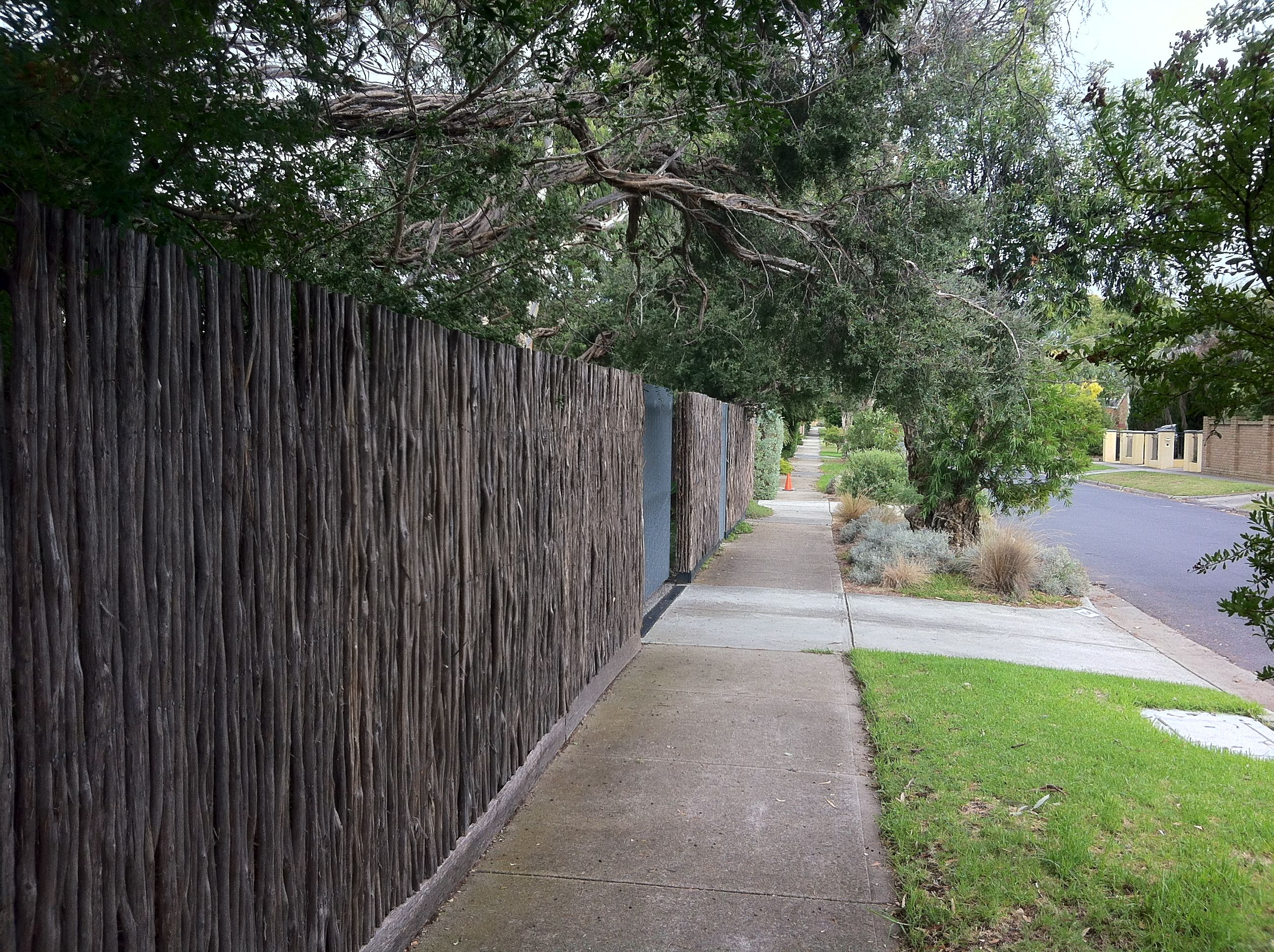 Tea tree as a fence material for privacy to a front yard tea tree as a fence material for privacy to a front yard baanklon Gallery