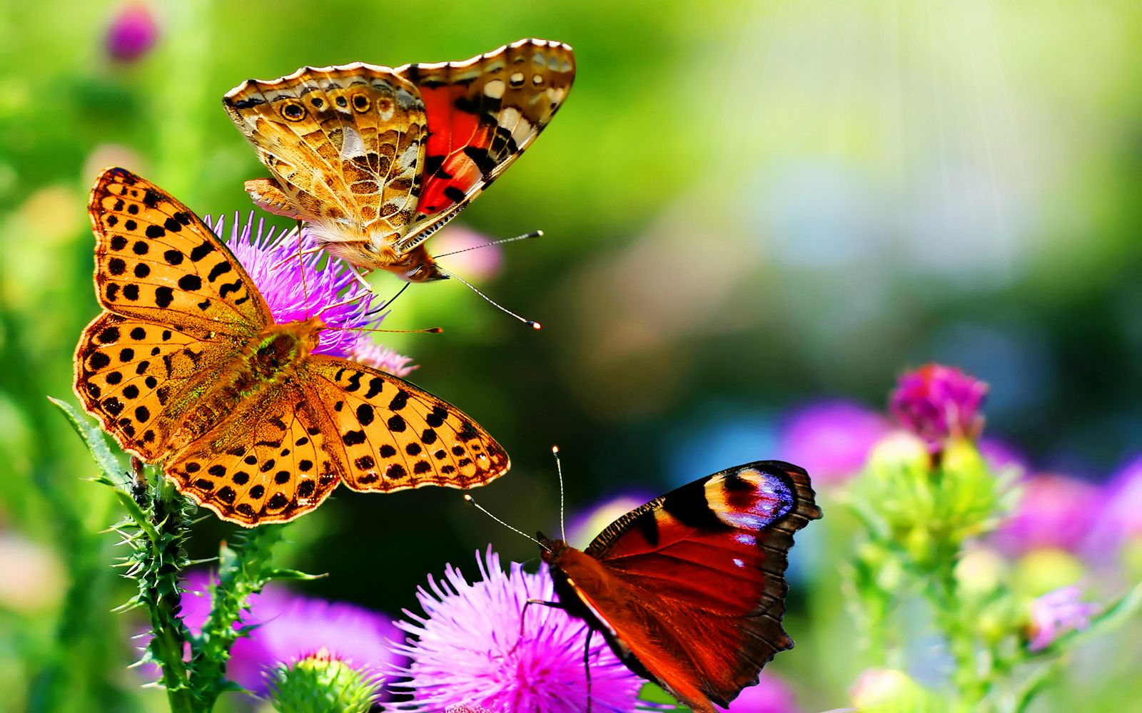Hd Butterfly Nature Wallpapers Most Beautiful Butterfly Beautiful Butterflies Butterfly Wallpaper