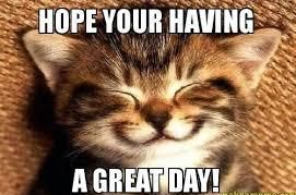 Hilarious Have A Great Day Cat Meme Have A Great Day Quotes