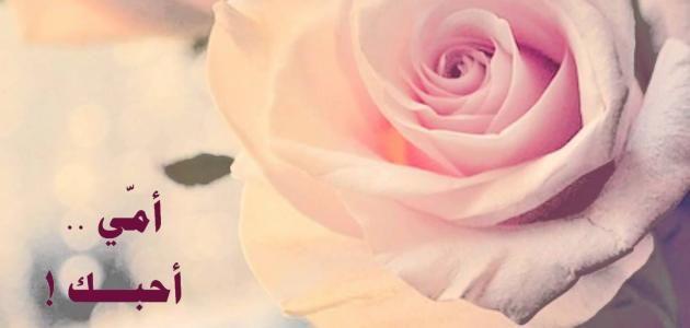 حديث الرسول عن الام موسوعة موضوع Rose Places To Visit Flowers