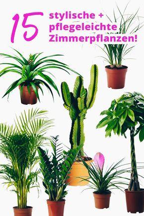 der pflanzen guide 15 stylische und pflegeleichte zimmerpflanzen plants pinterest. Black Bedroom Furniture Sets. Home Design Ideas