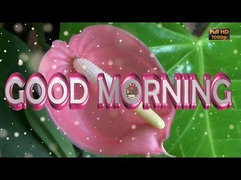 Good Morning Wisheswhatsapp Videogreetingsanimationmessages