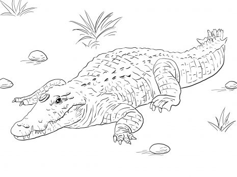 African Nile Crocodile Coloring Page Super Coloring Nile Crocodile Coloring Pages Animal Coloring Pages