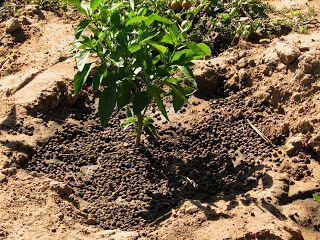 9b21e612b20bfc4f144e12f2259de980 - Is Goat Manure Good For Vegetable Gardens