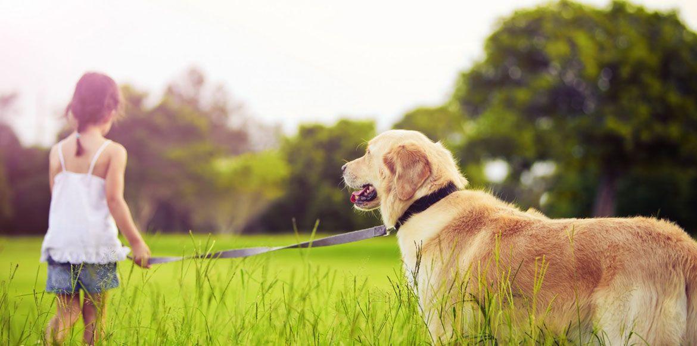 Habits Your Pet Should Have Mr N Mrs Pet Dogs Kids Dogs