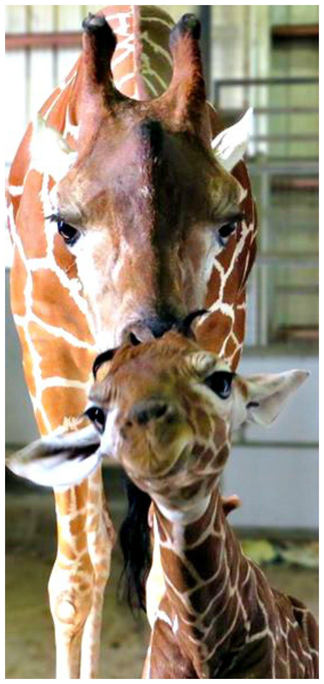 Jacksonville Zoo and Gardens baby giraffe Cute