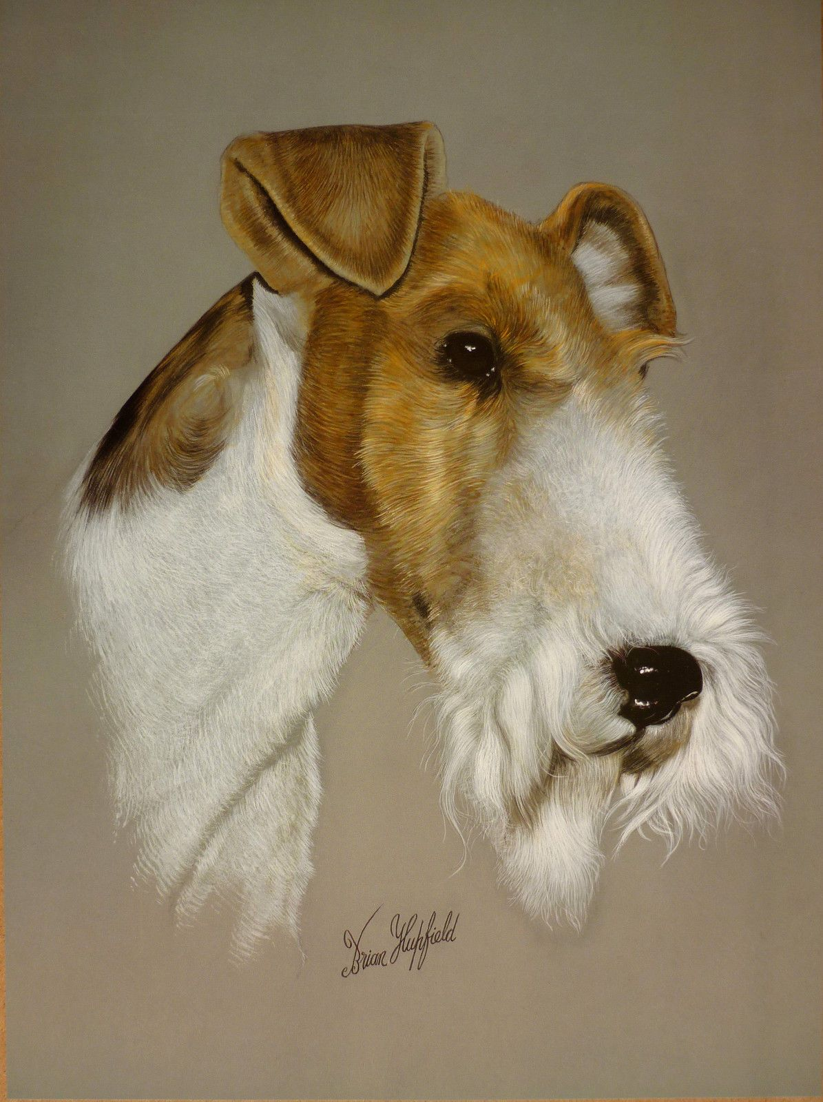 SALE WIRE HAIRED FOX TERRIER BY BRIAN HUPFIELD DOG PRINT