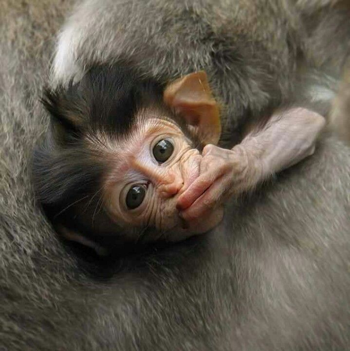 Cute Monkey Blowing Kisses Kisses Pinterest Cute