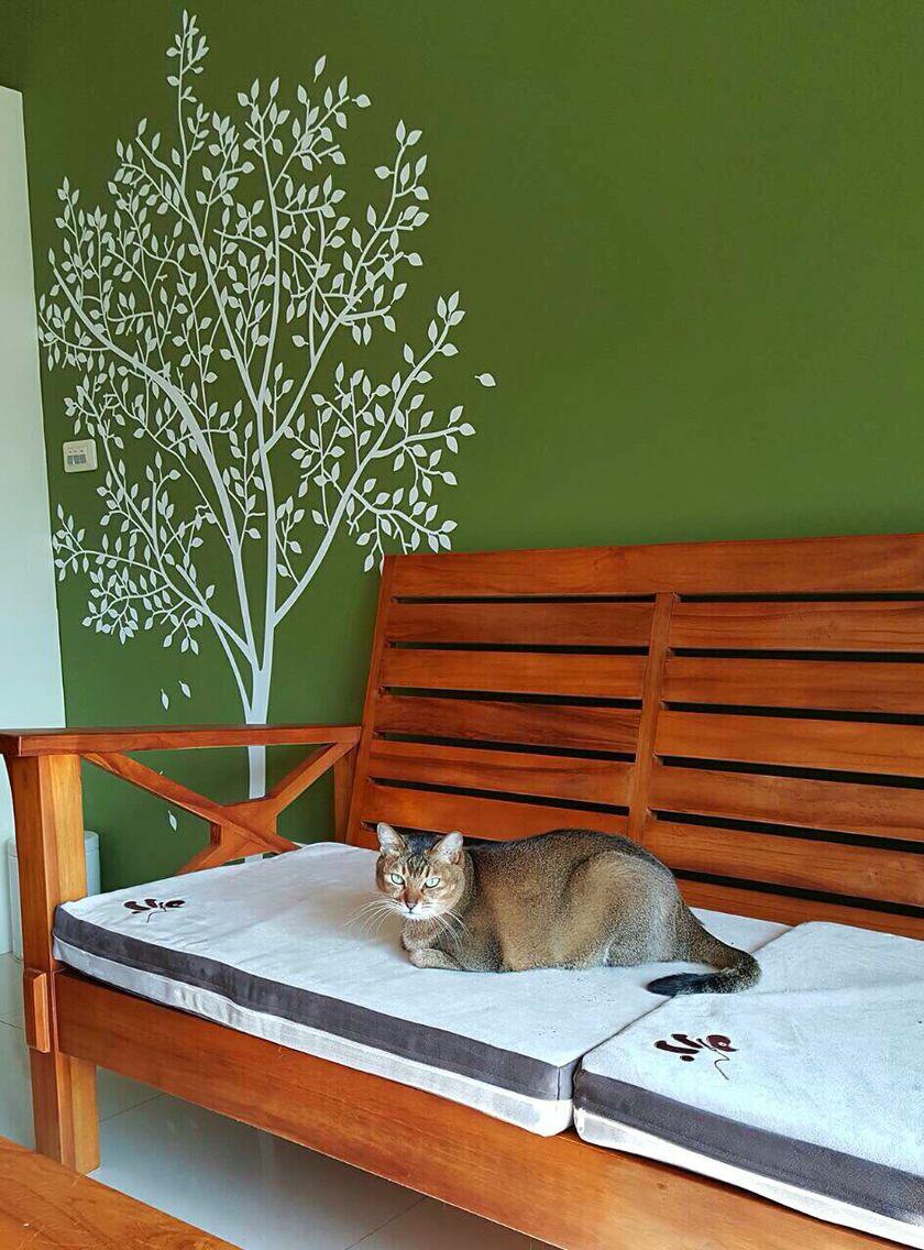 dijjo, pet bed, cat bed