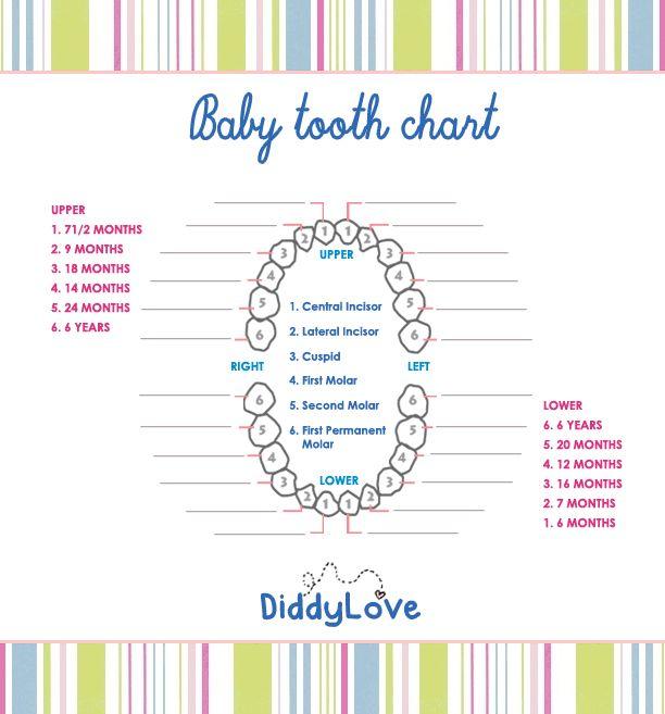 Baby Tooth Chart Wda Baby Teeth Matter Pinterest