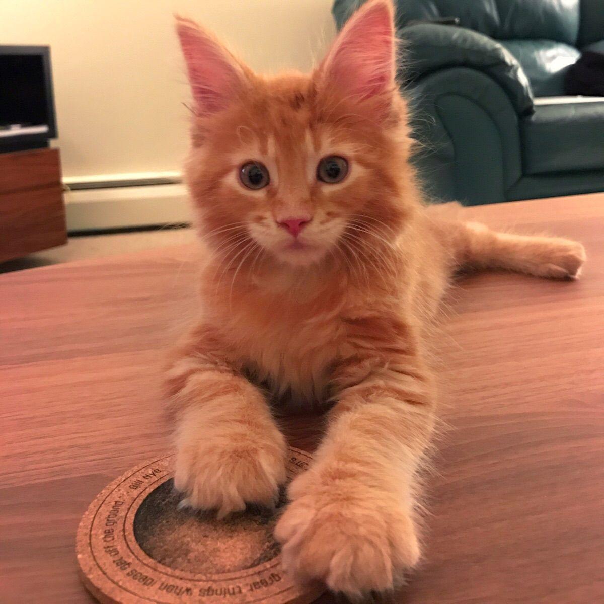 Pin On Beautiful Felines
