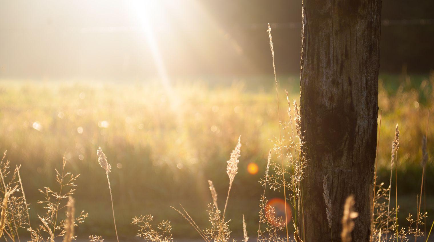 De zon komt er heel af en toeal eens door en dan is het fijn om evenbuiten te stappen en een frisse neus te halen. Zo ook in Blogland. Kom, trek je gemakkelijke schoenen aan, neem snel je jas, we…