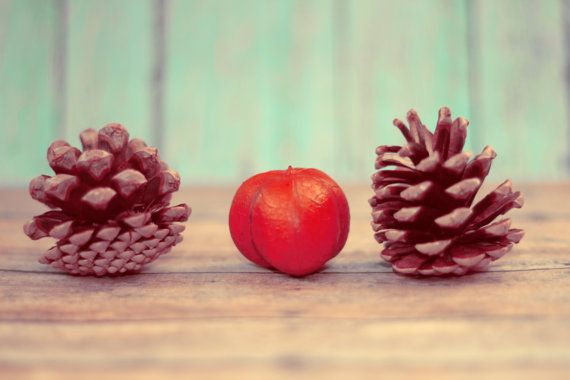 Fine Art Photography- Inspiration from Mother Nature: Two Pinecones
