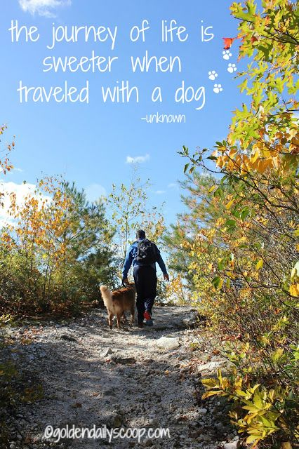 Why You Should Hike With Your Dog Walktober Golden Daily Scoop Hiking Dogs Dog Quotes Hiking Quotes Funny