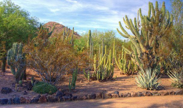 Desert Botanical Garden In Phoenix Arizona Desert Botanical Garden Botanical Gardens Desert Garden