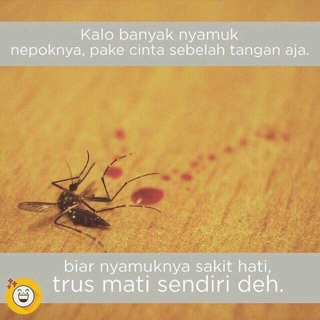 Cara Mengatasi Nyamuk