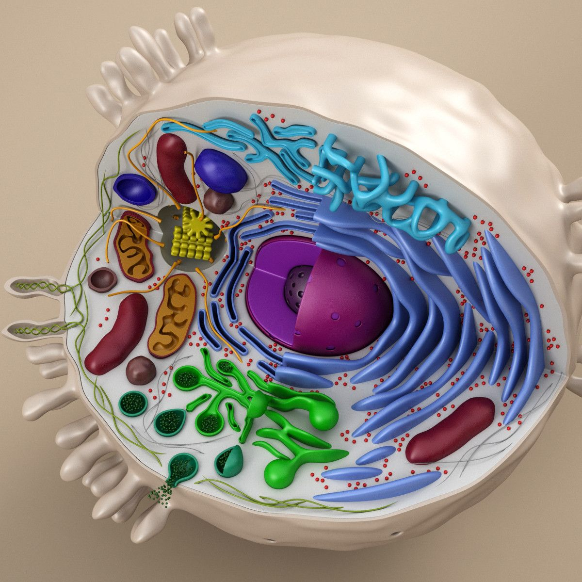 how to make 3d model of animal cell