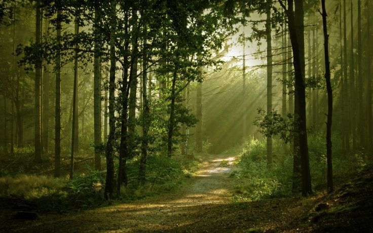 Landscapes Forest Path Sunlight Filtered Beam Ray Wallpaper Background Forest Path Landscape Forest