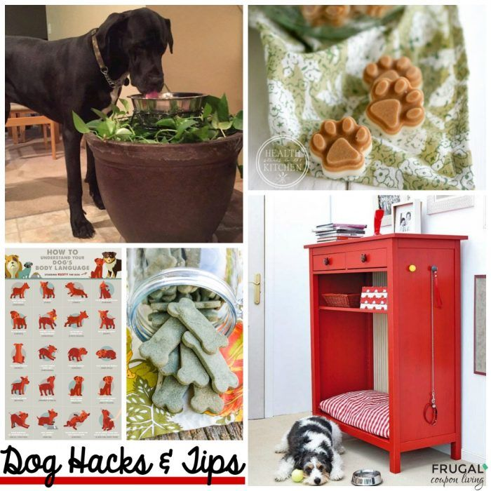 Apartments Near Me Pets: Dog Hacks, Old Dogs, Dogs