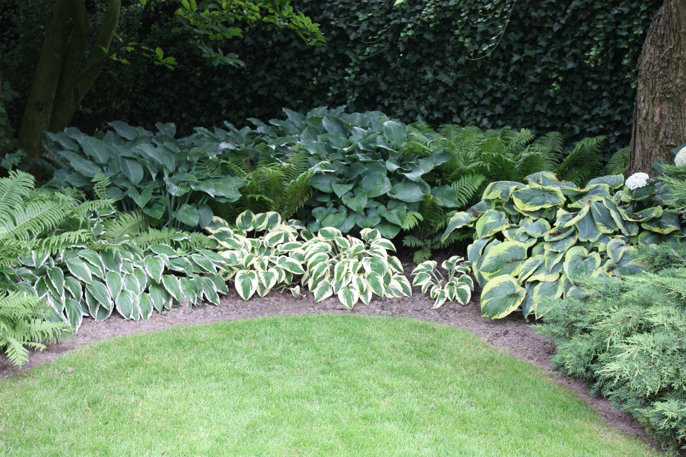 Gartentipp Schattenbeet Richtig Planen Und Anlegen Native Plants Schattenpflanzen Garten Garten Bepflanzen Garten