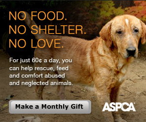 Consider A Donation To Aspca Aspca Animal Donations Donate