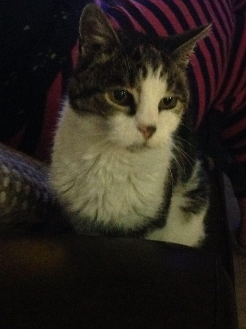 Adoption Corner Adoption Kitten Adoption Cat Adoption