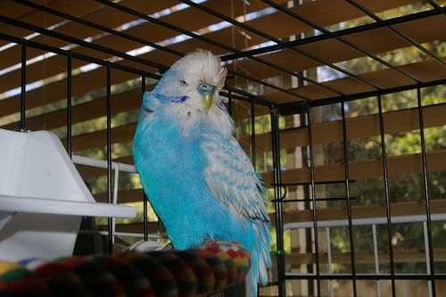 Petsmart Us Has Removed Birds For Sale From 500 Stores After 16 Test Positive For Psittacosis Psittacosis Is Contagious To H Pet Birds Birds For Sale Budgies