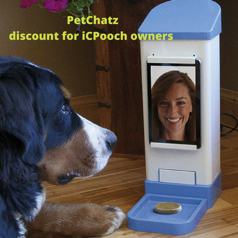 Pin On All The Buzz Petchatz In Action