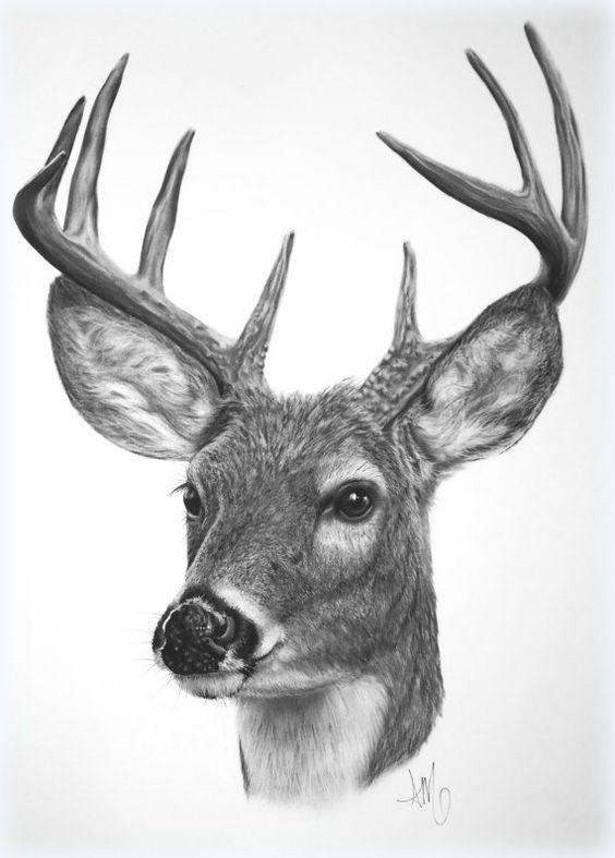 Resultado de imagen de imagenes dibujos ciervos | laminas ...