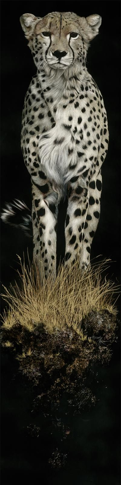 GREAT Cheetah beauty..! This is about my favorite animal portrait!