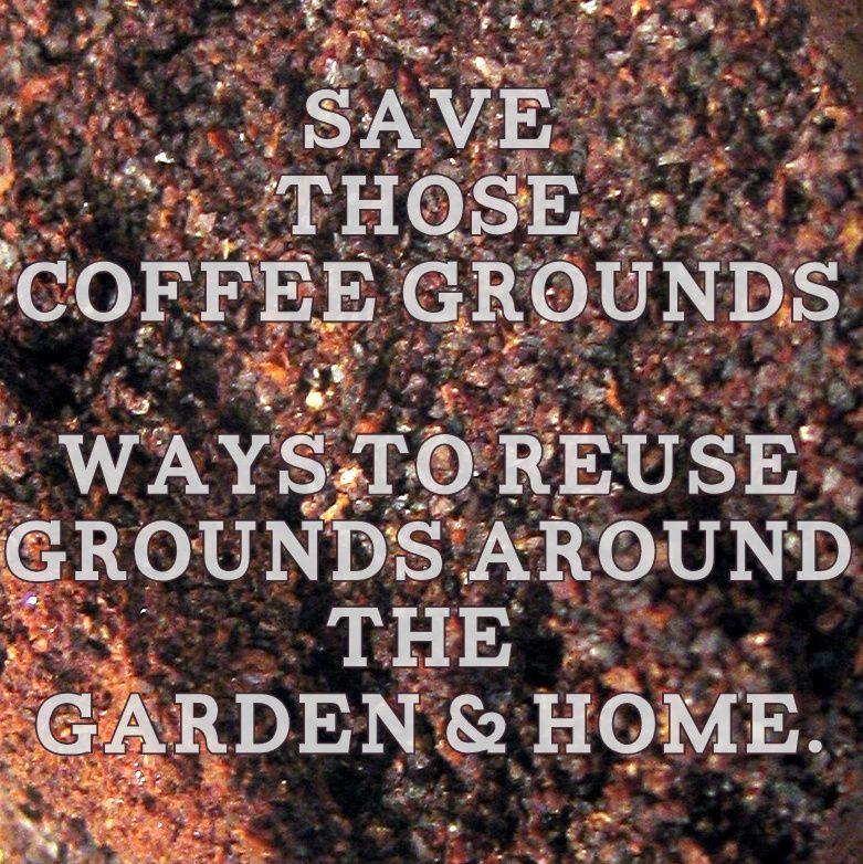 die besten 25 kaffeepflanze ideen auf pinterest kaffee tattoos arabica kaffee und kaffeebohnen. Black Bedroom Furniture Sets. Home Design Ideas