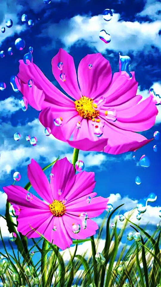 Flores Fondos De Pantalla Naturaleza Papel Pintado Flores Fondos De Pantalla De Primavera