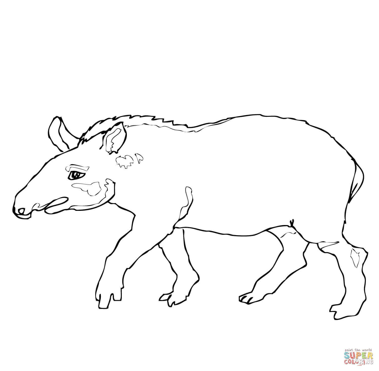 Tapir Kleurplaat Google Zoeken Animal Coloring Pages Witch Coloring Pages Coloring Pages