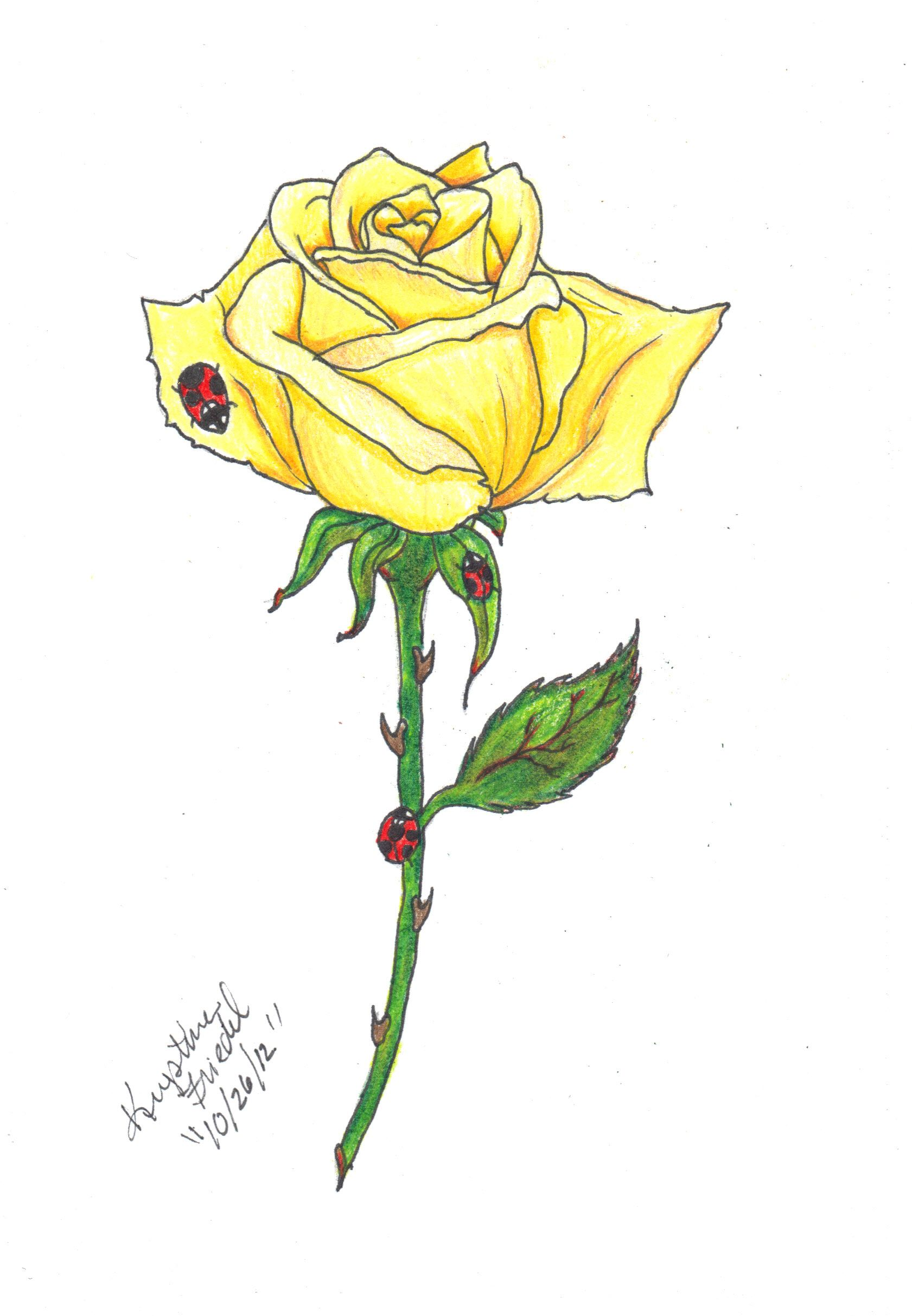yellow rose  commission  for tattoo