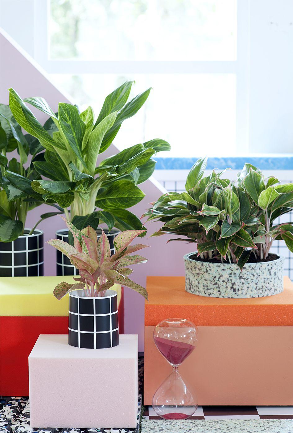 Decoratie Planten Binnen.L Aglaonema Like Plants Kamerplanten Planten En Planten Binnen