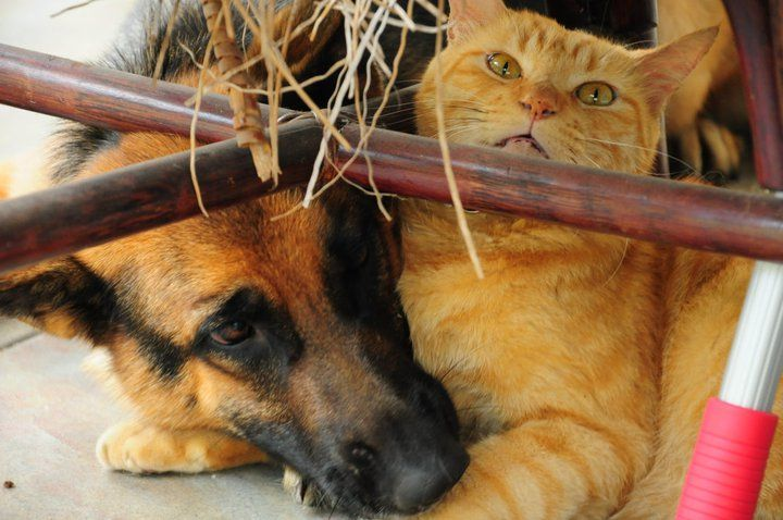 Cats and Dogs, who says they don't get along
