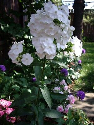 Northern Shade Garden - list of plants with pics for zone ...