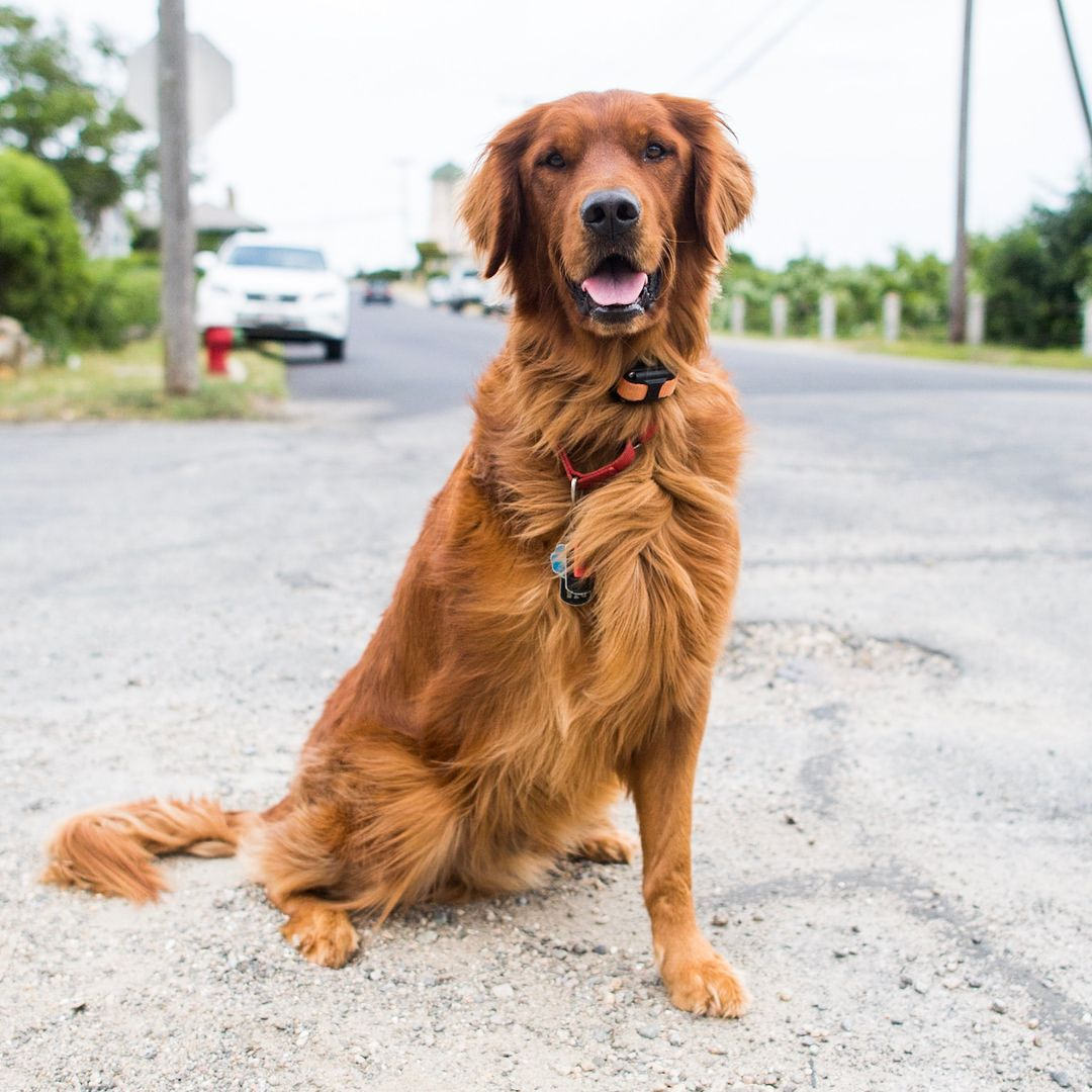 145.2k Likes, 1,785 Comments The Dogist (thedogist) on