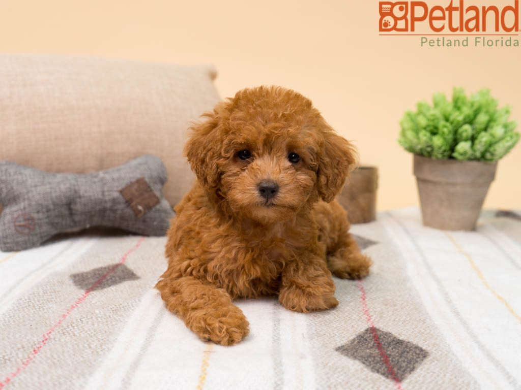 Puppies For Sale Pets Dogs Breeds Dog Breed Names Dog Breeds