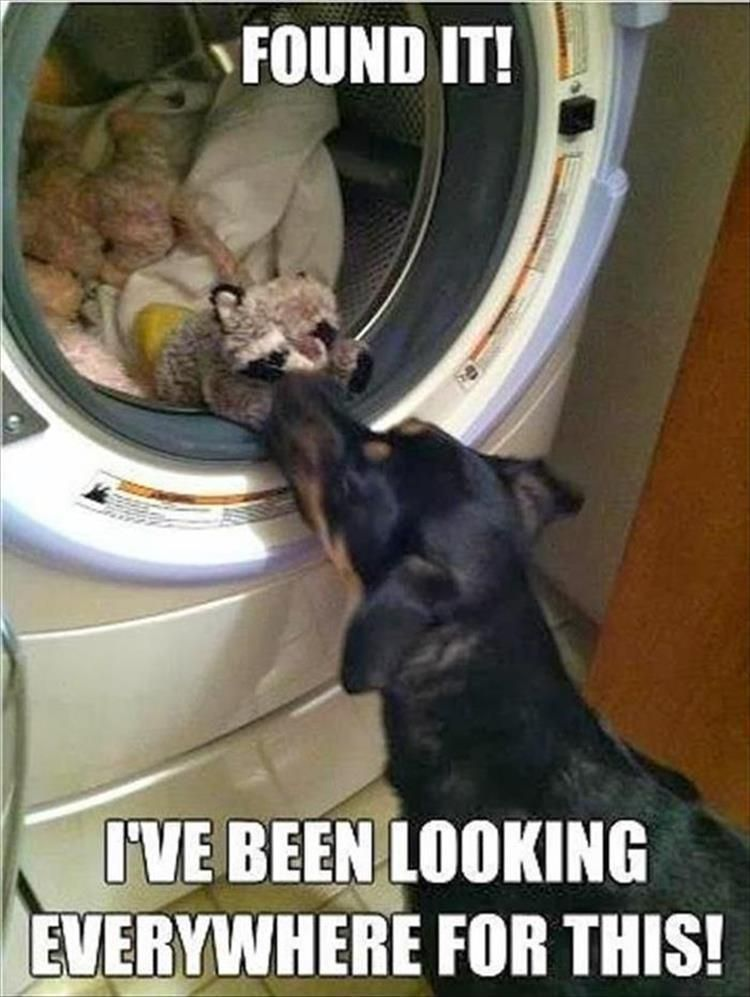 Funny Animal Picture Dump Of The Day 24 Pics #funnydoghumor