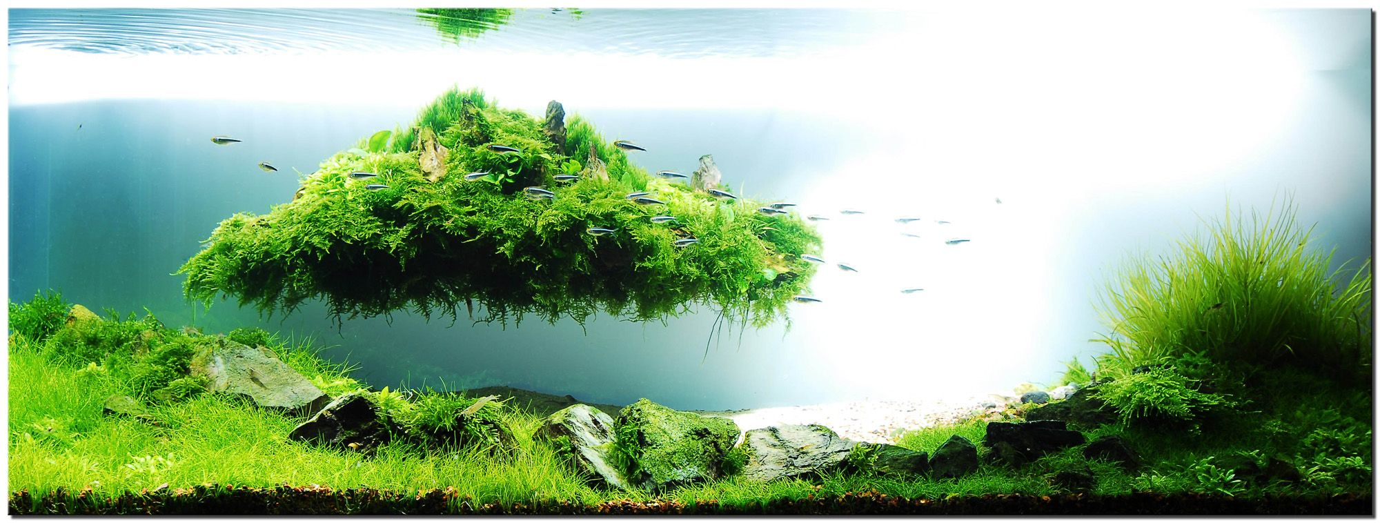 Awesome Aquascape Designs Aquarium Ideas Inspiration: Floating Grass And  Stoneu2026