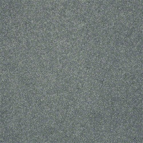 Carpet See The World Iii S Tropic Wave Shaw Carpet Pet