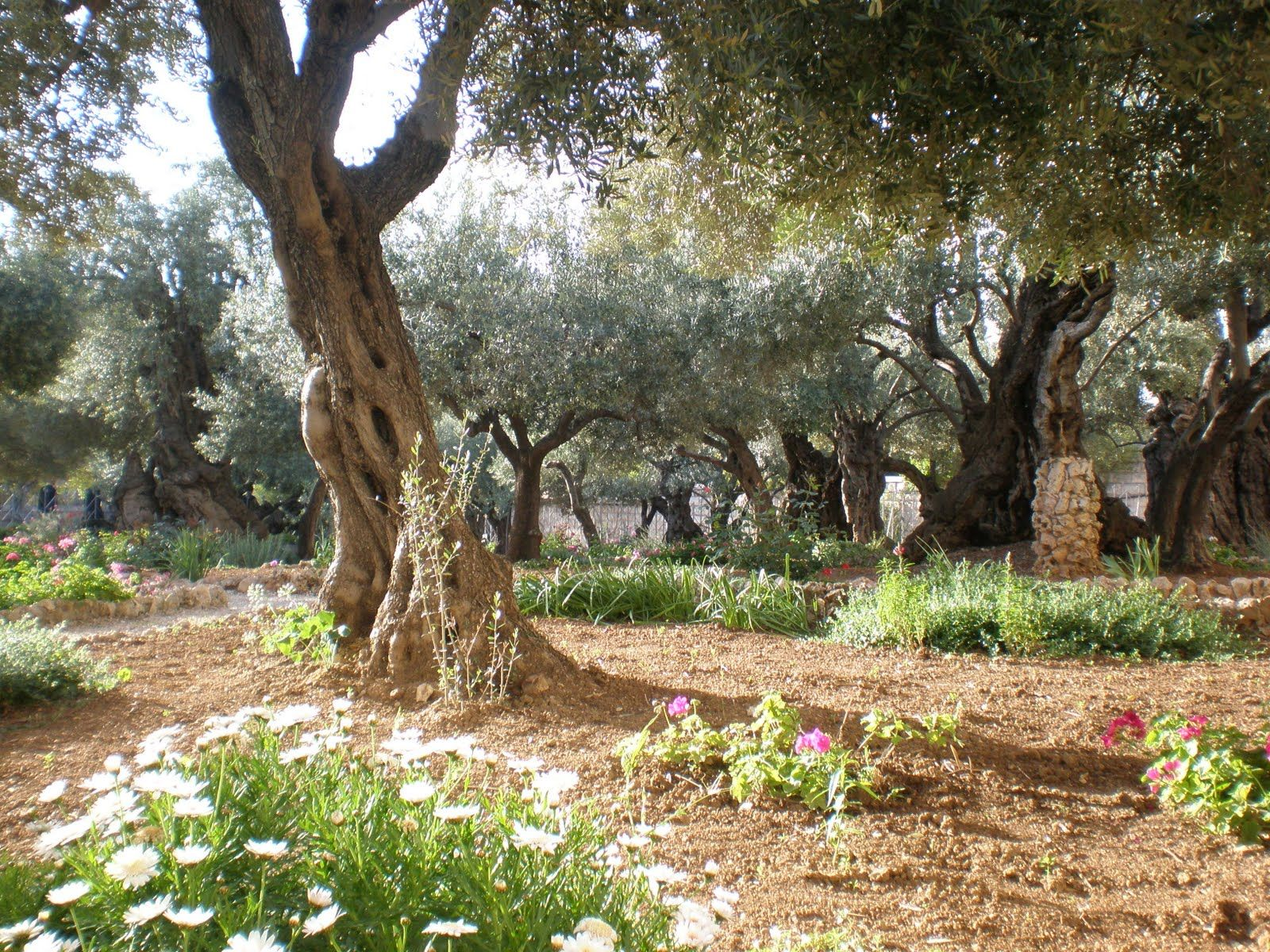 The Garden of Gethsemane According to all four Gospels