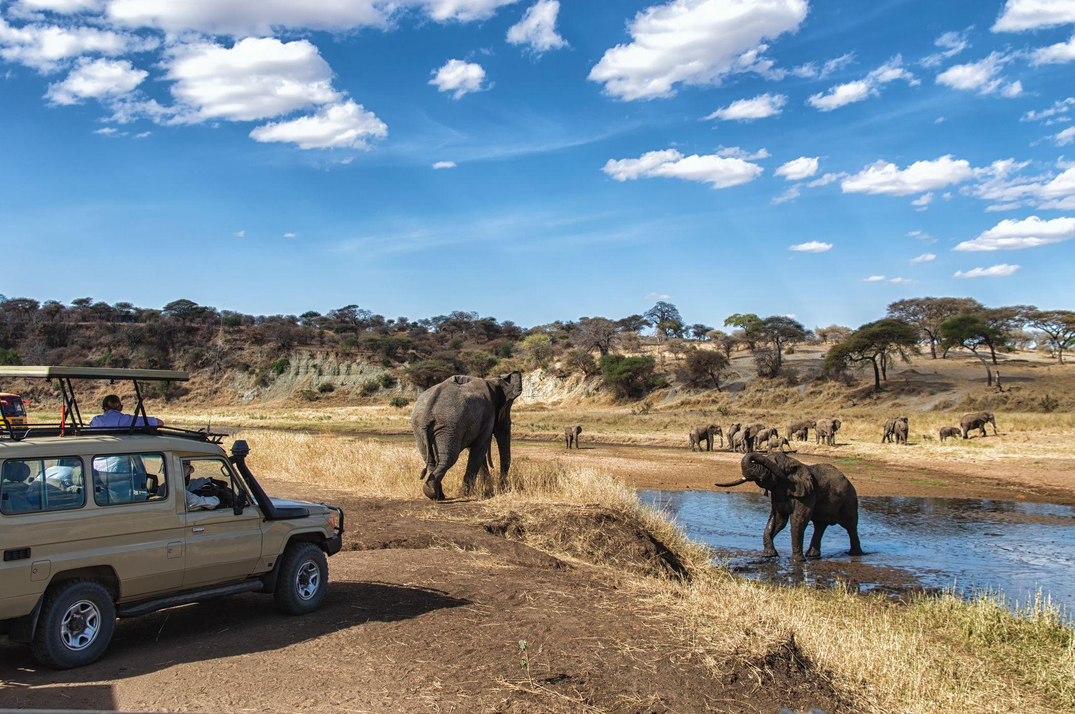 Safari, Tanzania Wildlife safari, Tanzania national
