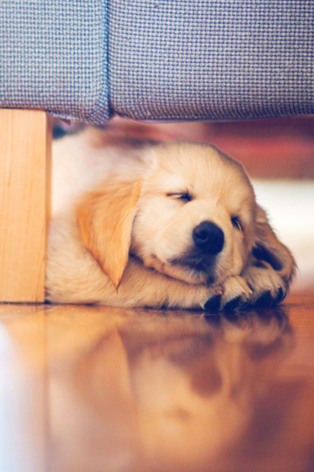 Weekly Inspiration 24 Puppies Cute Animals Cute Baby Animals