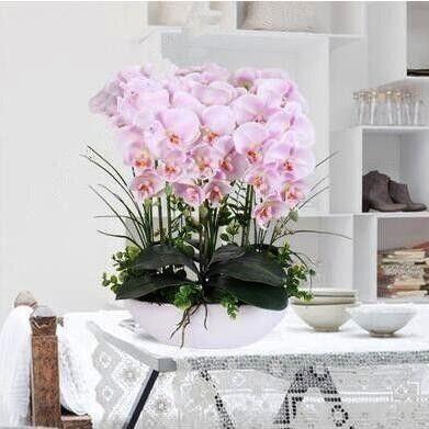 stücke Phalaenopsis Orchidee pflanzen Bonsai Hydroponics Blume pflanzen Pfl 200 stücke Phalaenopsis Orchidee pflanzen Bonsai Hydroponics Blume pflanzen Pfl  con...