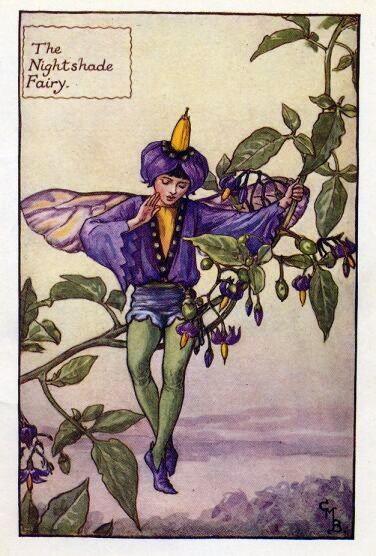"""Morelle douce-amère (Fr), Bittersweet or woody nightshade (GB), Solanum dulcamara (L)  - Ici en fleur, les baies sont rouges / here flowers, redberries are red  -  Cicely Mary Barker """"The Nightshade Fairy"""""""