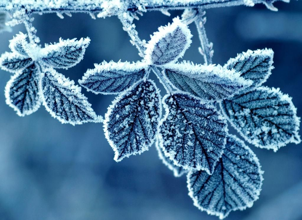 Frozen Leaves Full Hd Wallpapers Winter Wallpaper Winter Nature Winter Images