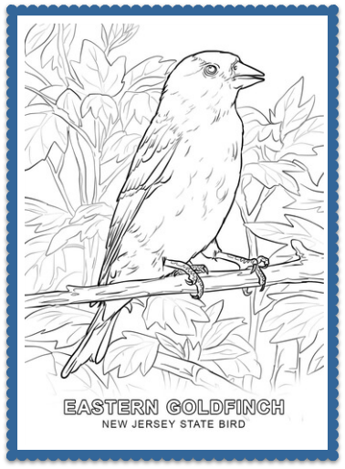 State Bird Coloring Pages by Bird coloring pages